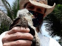 Wildlife Rescue Bradenton Sarasota Florida