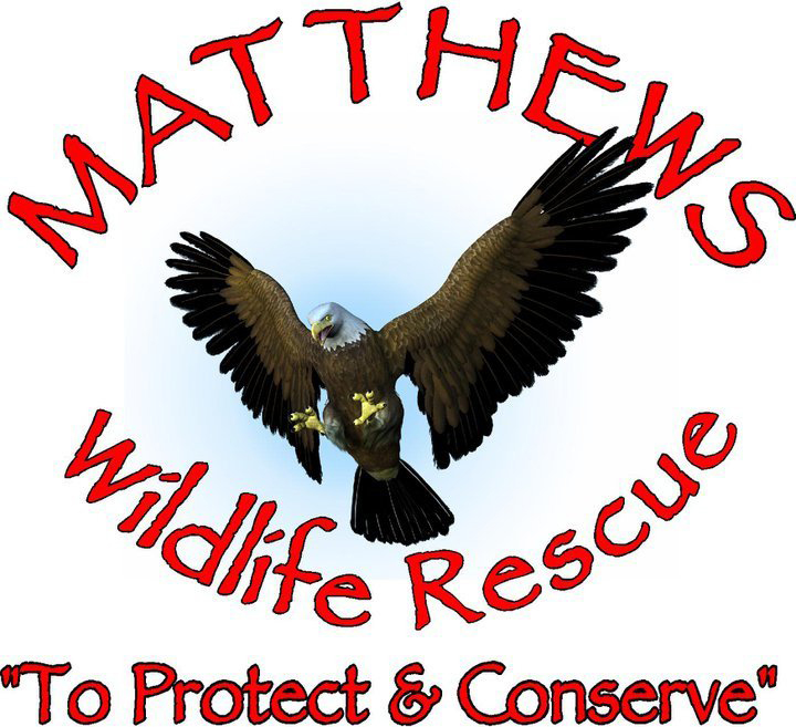 Matthews Wildlife Rescue