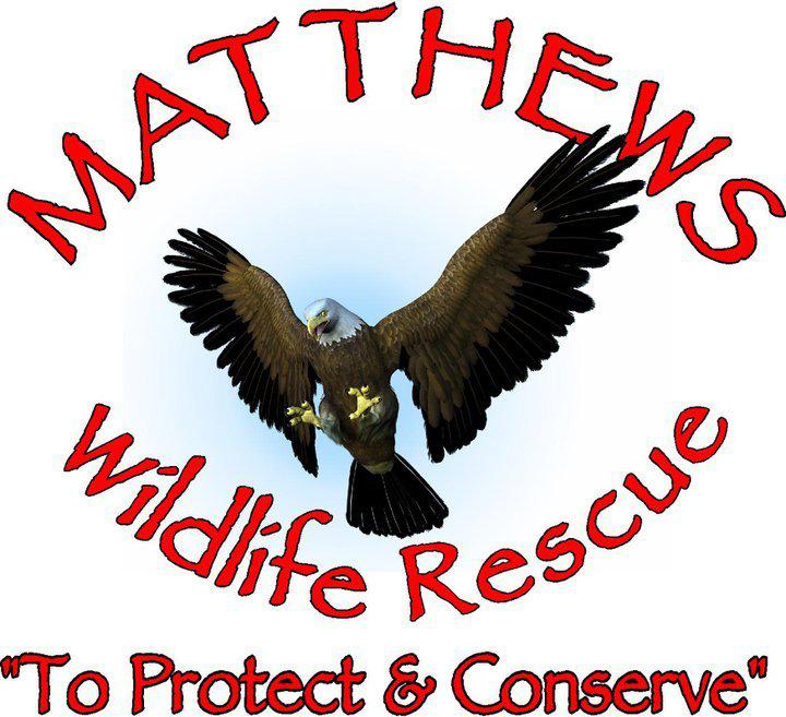 Matthews Wildlife Rescue
